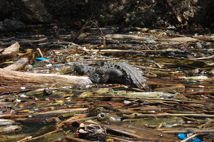 Fupete fupete DSC 5982 Tierra Y Azul 2008
